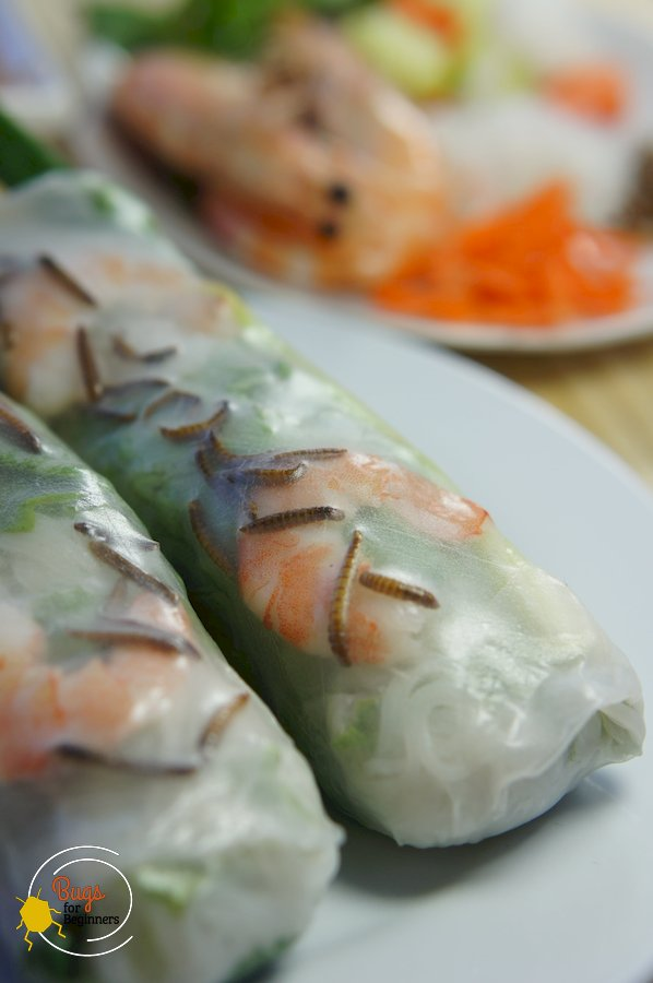 Mealworm Spring Roll