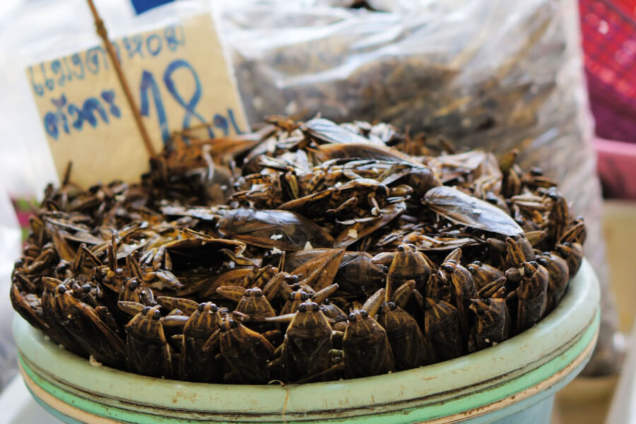 Giant Waterbugs for sale in Bangkok