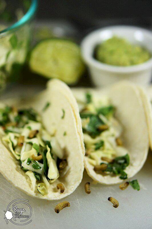 Waxworm Green Tacos